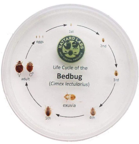 Sentry Pest Solutions: pest control serving New Lenox, Joliet, Frankfort, and Homer Glen, bedbug life cycle and treatment