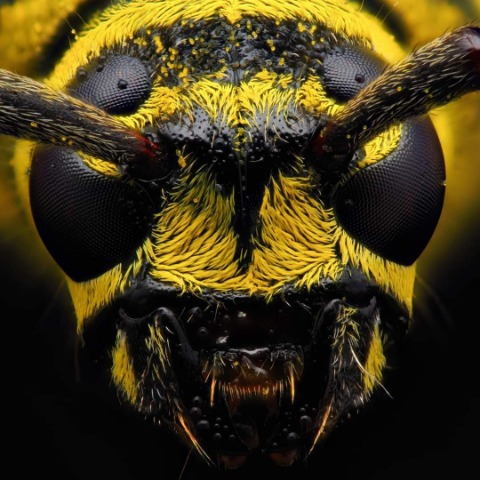 bees pest control serving New Lenox, Joliet, Frankfort, Homer Glen IL, Sentry Pest Solutions
