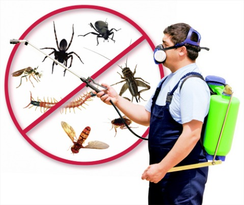 mosquitos, ticks, wasps pest control, New Lenox, Joliet, Frankfort, Homer Glen IL, Sentry Pest Solutions